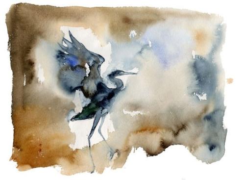 herondancebird